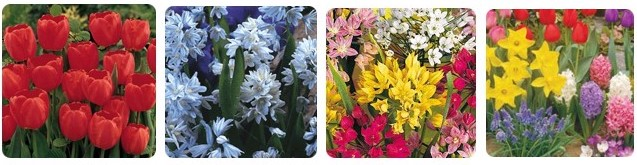 Several spring flowers available for purchase in the Fall Bulb Fundraiser